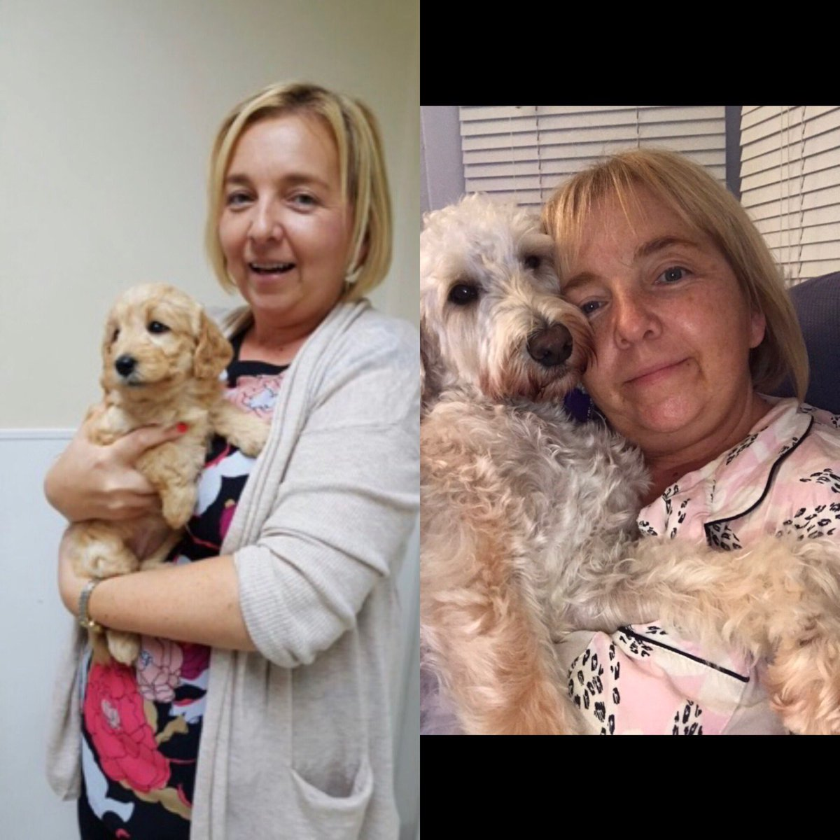 test Twitter Media - Today is our 'Gotcha Day'.  Four years ago today that Daisy came home and came to Hollywood. She loves everyone and everyone loves her and she has made such a difference to lots of children's lives. Happy Gotcha Day Daisy. https://t.co/AVnZ5lsjnL