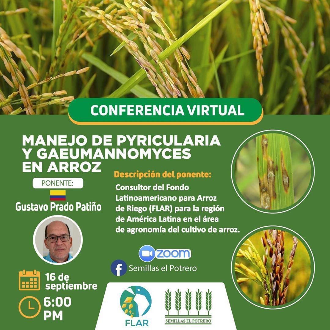test Twitter Media - #Prográmate esta tarde para la charla virtual sobre Manejo de Pyricularia y Gaeumannomyces en #arroz, que dictará Gustavo Prado Patiño, consultor de @arrozFLAR   🕕Hora: 6:00 p.m. 🇵🇪 ▶️Conéctate: https://t.co/CDHIWSiA1M  👥Organiza: @hpotrero_sac https://t.co/PBRrBINp43