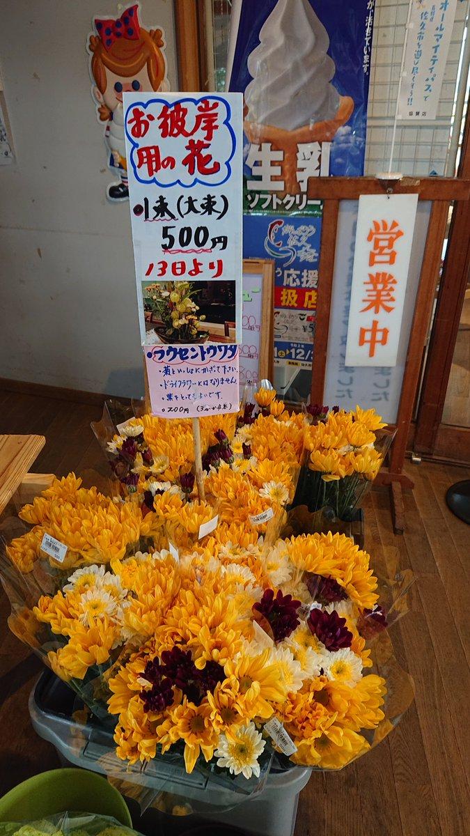 test ツイッターメディア - 秋のお彼岸用のお花、ほっとぱーく・浅科で格安で販売しています。 #佐久市 #佐久 #浅科 #花 #彼岸 #彼岸花 #道の駅 #ほっとぱーく浅科 https://t.co/dooUJ1HFD7