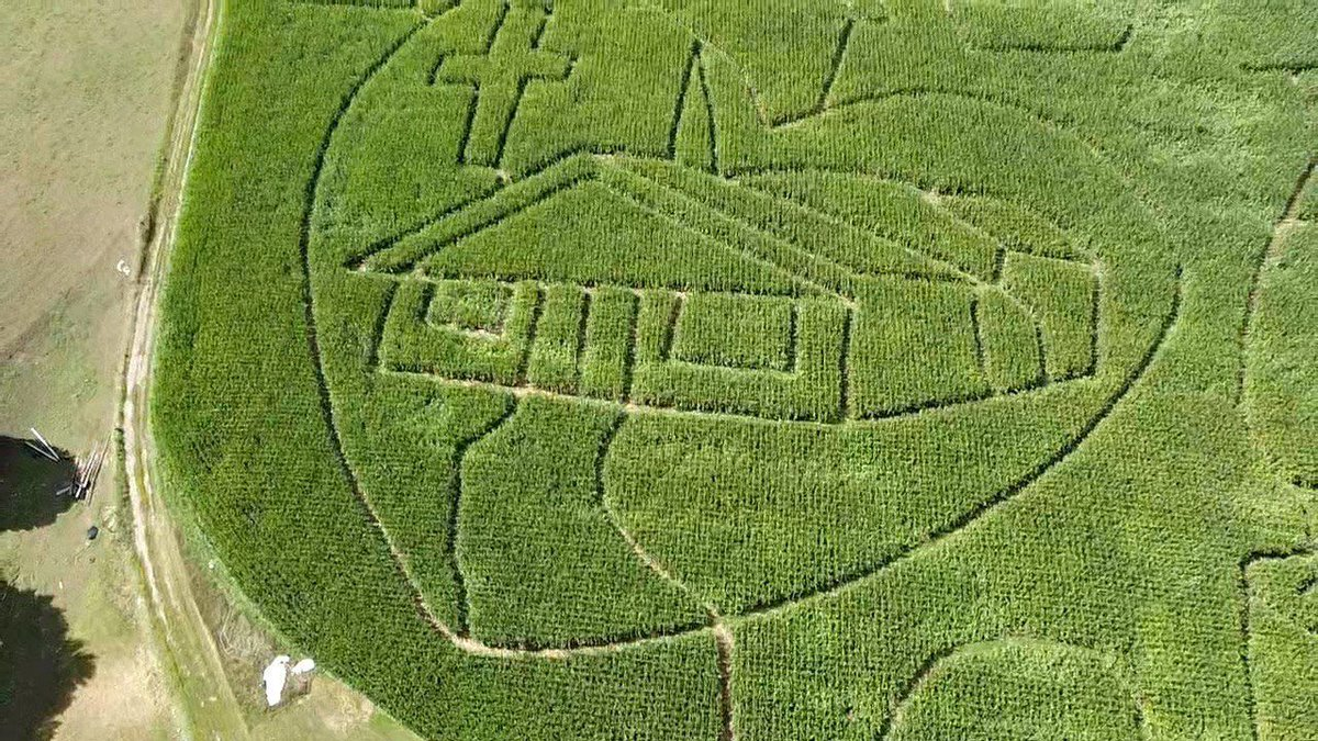 """The Cove Run Farms Corn Maze will open for its 20th season at the farm of Bob and Alice Bender in the Cove area of Accident on Saturday, September 19th. This year's design is """"Divine Hope Cares"""" in honor of Divine Hope Church in Oakland."""