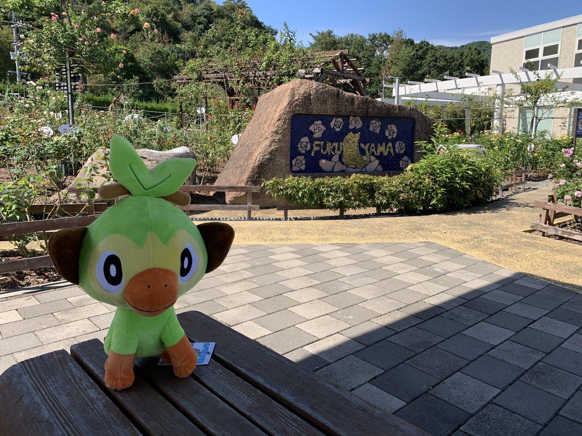 test ツイッターメディア - ポケモンセンター広島で500円のくじで特賞の等身大サルノリが当たりました〜! ガラルでの相棒だったのでとっても嬉しい(*´∀`*) ポケモンGOでは、個体値100のココドラさんが来てくれた〜。 色違いも来るといいな!  #ポケモンGO https://t.co/m1lKn72PM6