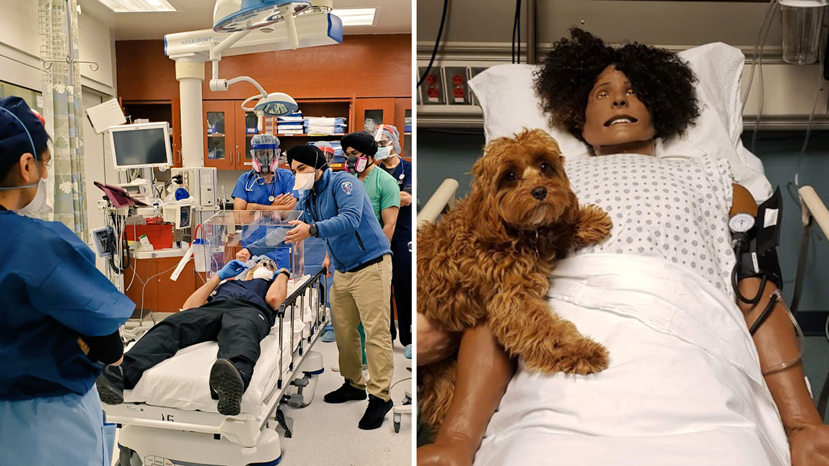 The #HCSimWeek20 festivities continue with a shoutout to our simulation center staff at NYC Health + Hospitals/Jacobi #inTheBronx. Learn more about our simulation centers:  #HealthSimNYC