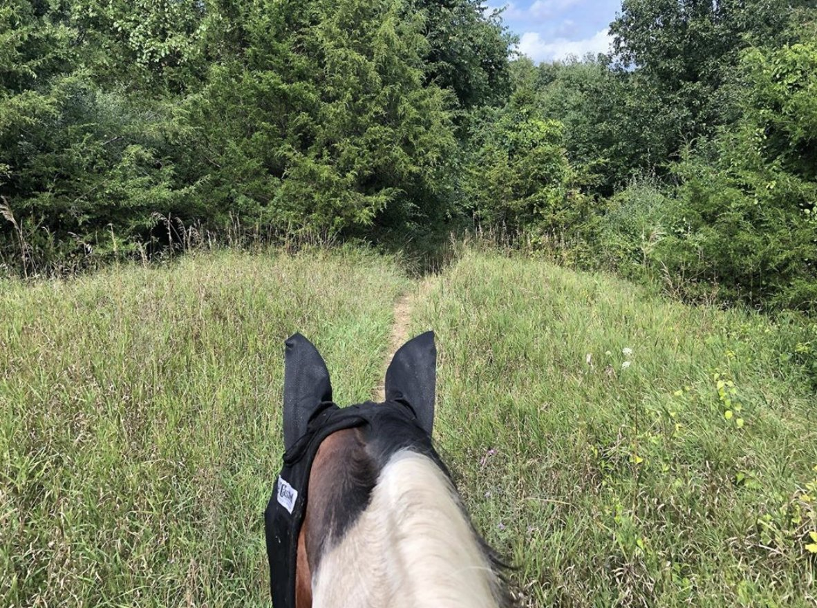 Time spent with horses is never wasted! 🐴 Saddle up for your own Livingston County adventure.   📸: thepaintedstates on Instagram
