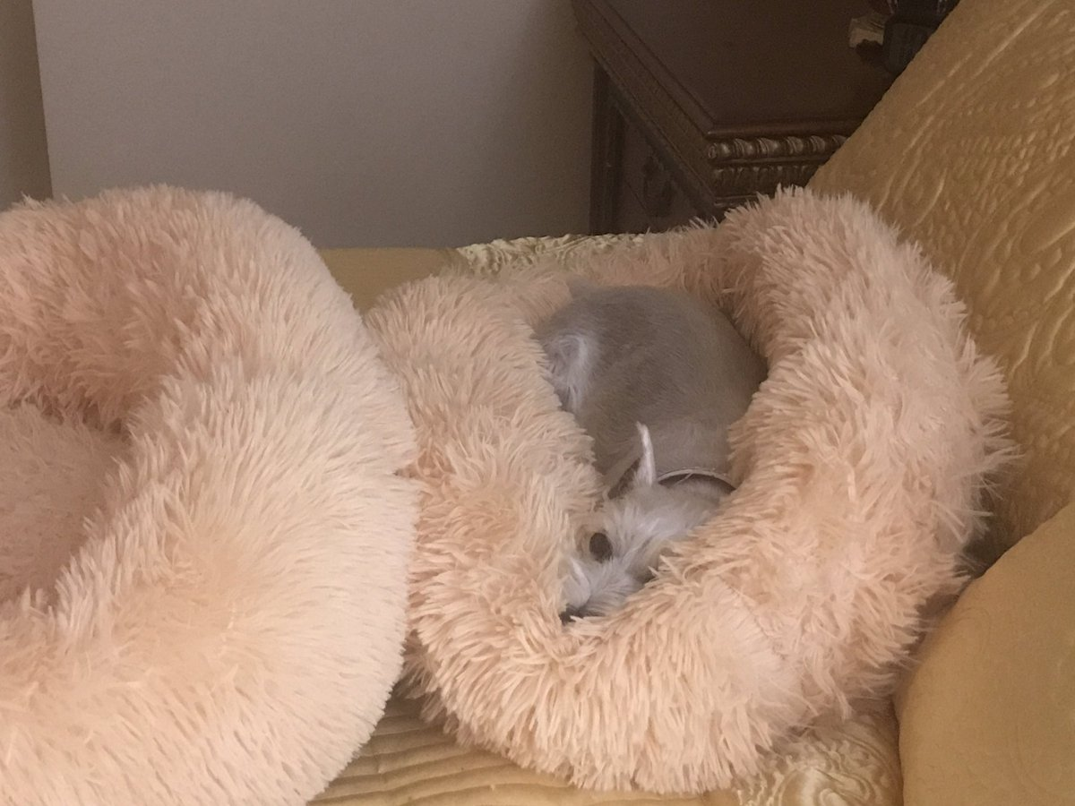 New fluffy donut beds for the girls. I tjink Penny likes hers!...