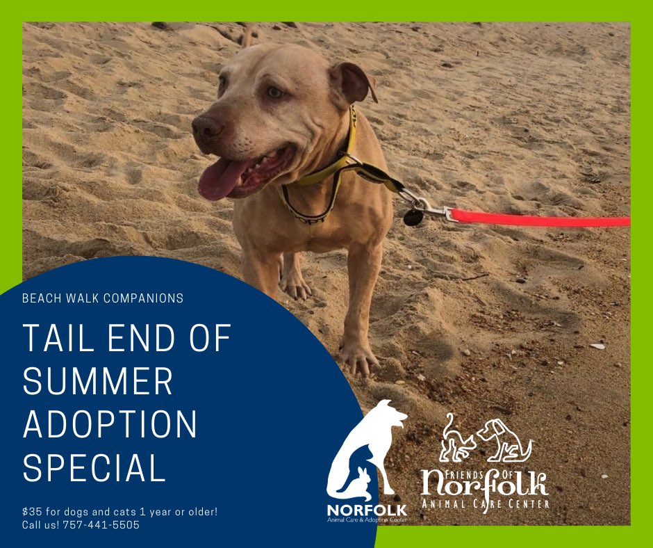 #NorfolkVA beaches are now open all day for dogs, why not find one to take with you? @norfolkanimals has plenty of dogs to choose from and they've lowered adoption fees to just $35 for dogs 1 year+! 🐕 🏖 🐾 Cats (1 year+) are also just $35. 😽 📞 757-441-5505 📧 nacc@norfolk.gov