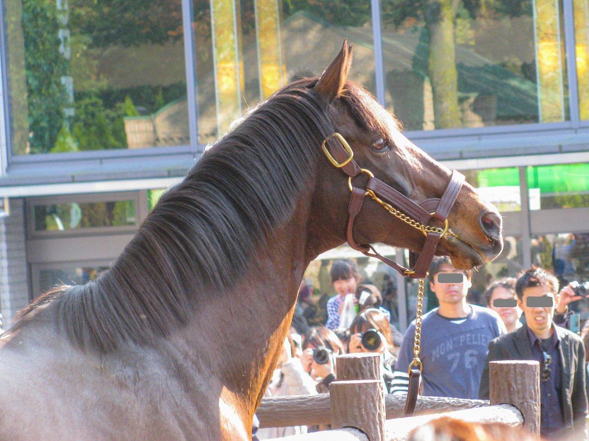 test ツイッターメディア - 今は亡きトウカイテイオーがトレンド入りする事はあまり無いと思うので、ここぞのタイミングで投稿w 2009年11月7日に東京競馬場へお披露目に来た時の写真。 競馬を知って最初に好きになったお馬さんです。しかし何度見てもイケメンだなあ... https://t.co/Y5iz36PoPK