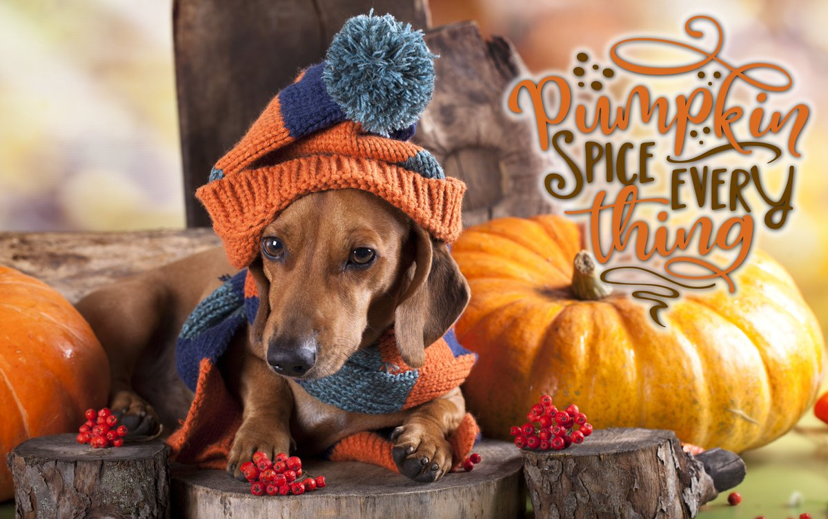 Today is officially the first day of Fall. Happy pumpkin spice everything season! @HarfordExec