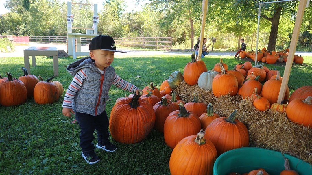 Happy fall, y'all! Time to pick the perfect pumpkin! 🎃  Plan your autumn adventure here:   (📸: yohanaisabella via Instagram)