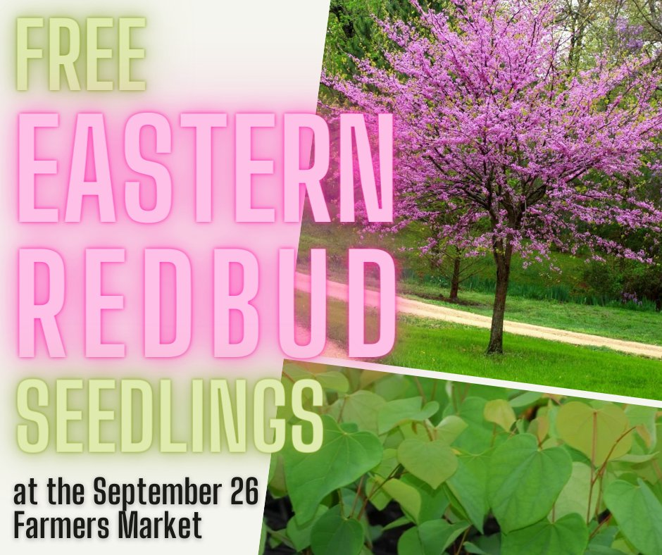 Treebie freebie! The Environmental Sustainability Council has partnered with the Falls Church Garden Club to give away Eastern Redbud tree seedlings at this Saturday's Falls Church Farmers Market (300 Park Ave.) Pick one up from 8AM-noon.