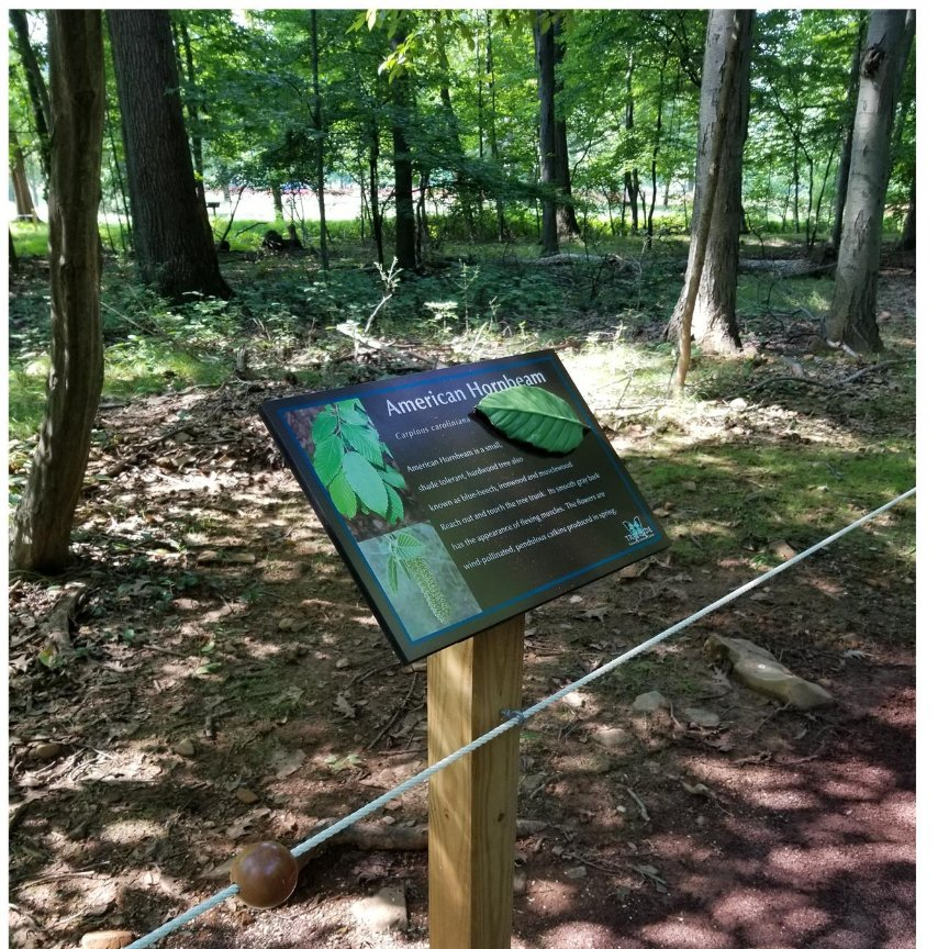 Free Guided Nature Walks for Seniors on Wednesdays, on the Sensory Friendly Trail at Union County's Trailside Nature and Science Center in Mountainside -- Masks are required and social distance rules will be observed at all times.