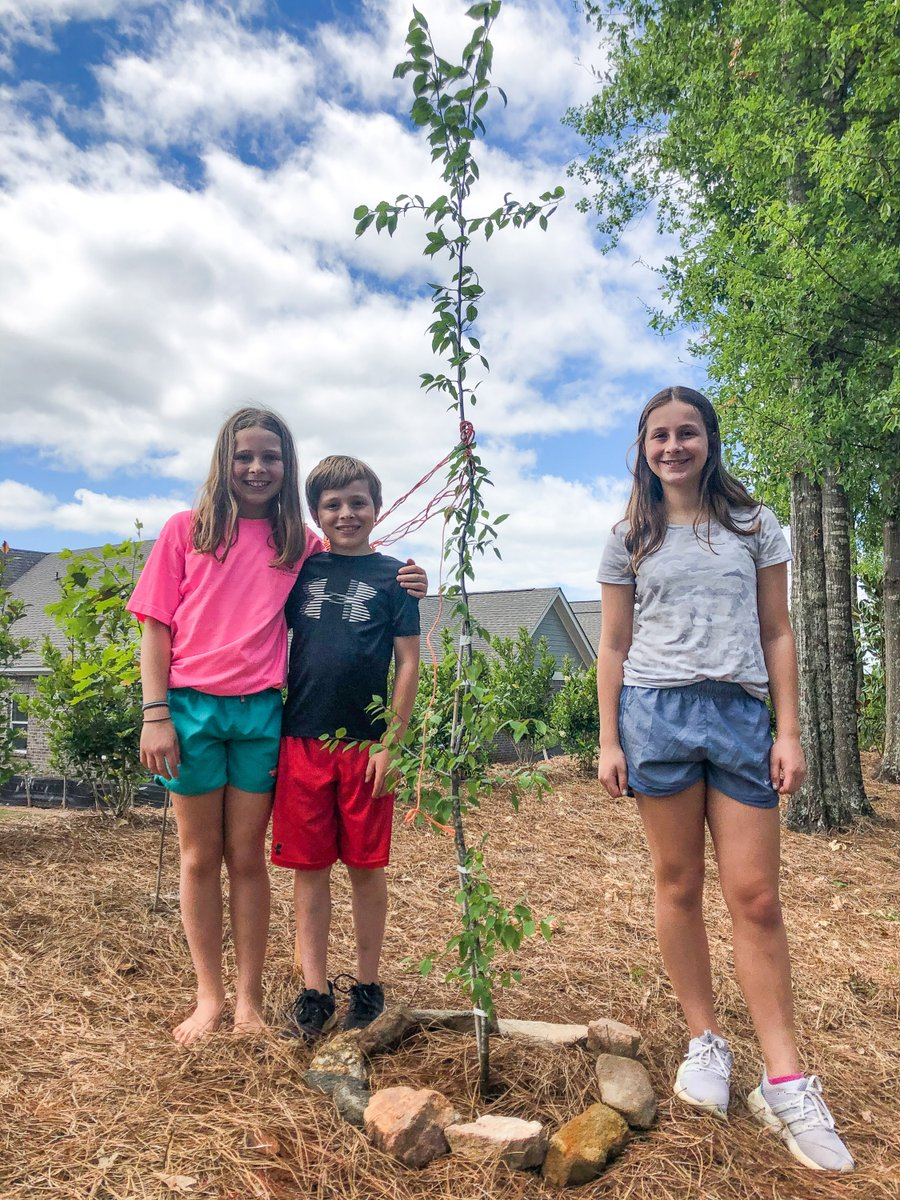 The Daniel family planted this Mexican plum tree after participating in our Invasive Tree Exchange program! They received the tree for FREE after cutting down an invasive Bradford pear tree in their yard.   Find out how you can participate 👉 .