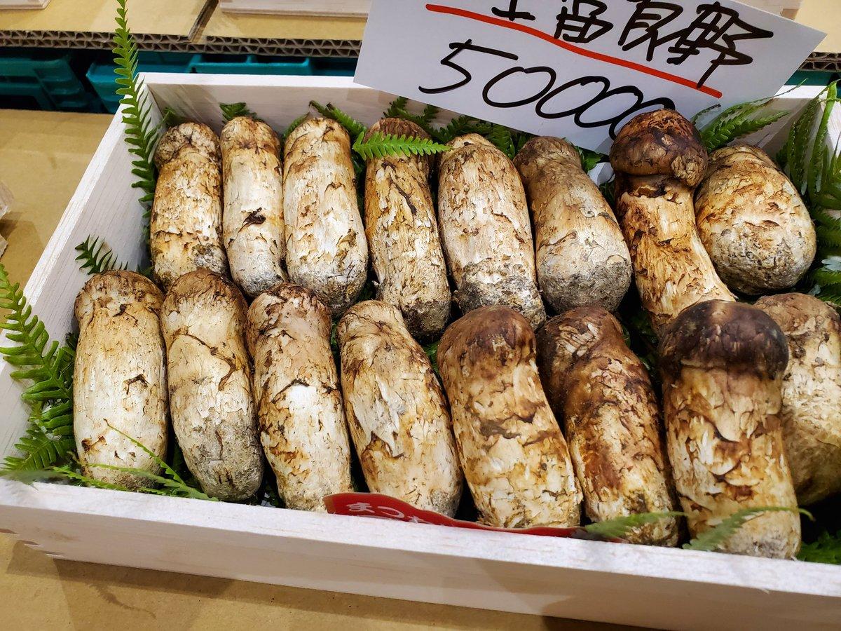 test ツイッターメディア - 今朝の豊洲市場・政義青果、岩手・北海道から松茸が入荷しました♪ 連休明けもあってか大幅に増え価格もやや下がりました😄🍄 #豊洲市場 #政義青果 #松茸 https://t.co/XadebB9Cxh