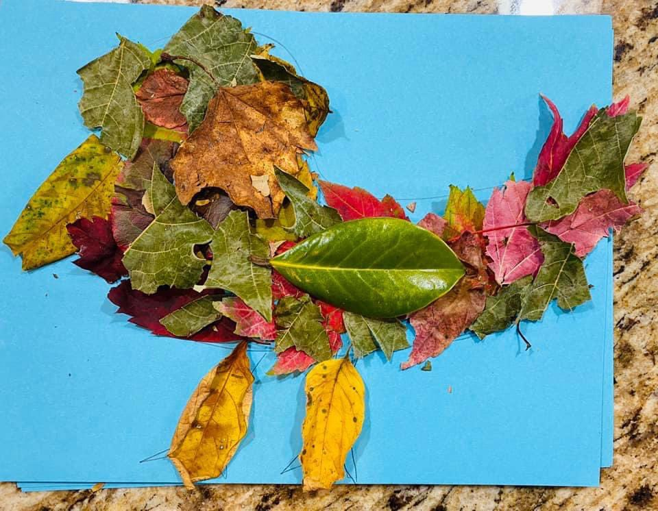 RT @mann_lab: STEAM Lesson 4...more amazing Leaf Designs! @MannElementary @Boone_County @SuptTurner