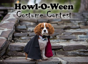 The Howl-O-Ween Costume Contest is coming up quick! Make sure to get your pup signed up for a great time! Each registered dog will get to compete in the costume contest & receive a goodie bag.  Fee is $6/dog. Call 309-524-2424 or visit  to register today!