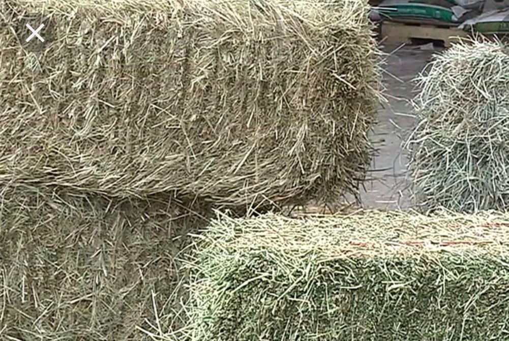 Need hay? If you were affected by #OregonWildfires2020 and need help #feeding your #animals, @OSUAgSci wants to hear from you. Please fill out their survey so they can distribute the donated hay ASAP! #WhatWeDo #AgIsCool  #WednesdayMotivation #wildfires