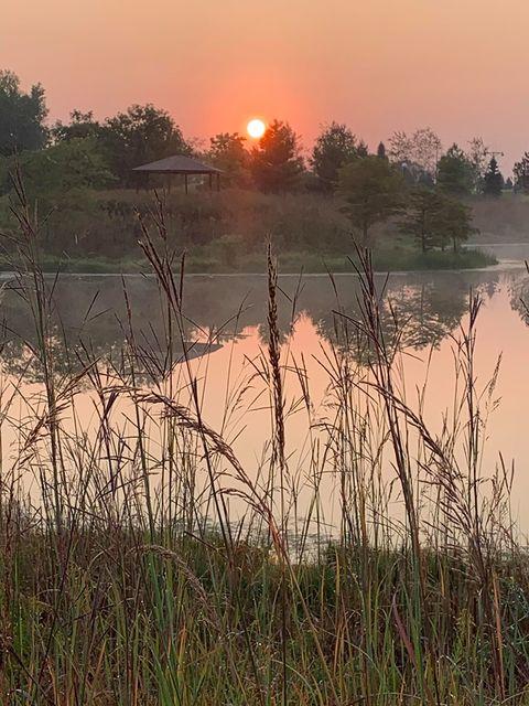 RT @VHParkDistrict: Good morning from Century Park Arboretum! #vhparks 📸 : Megan Gifford Wright