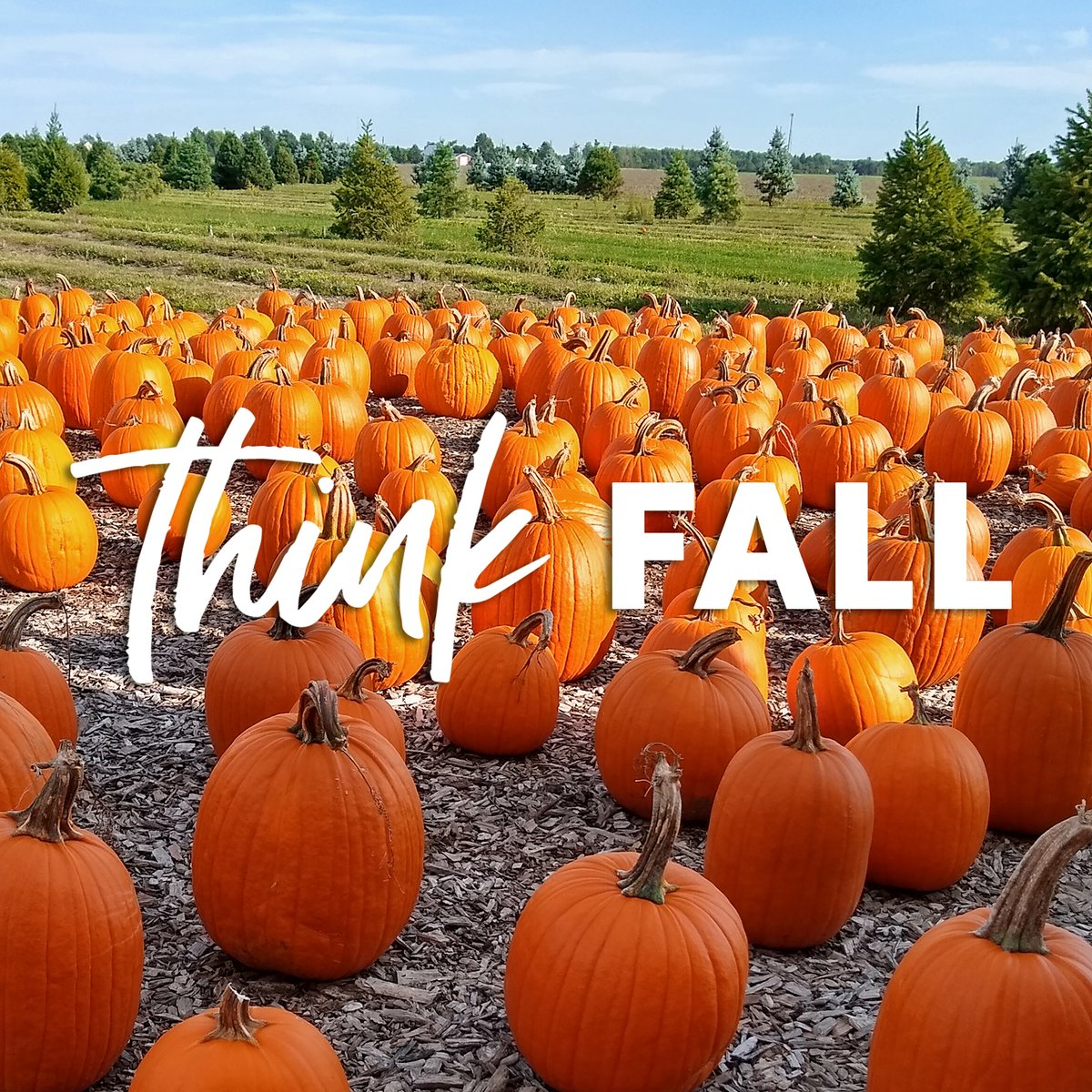 From sipping a hot beverage to going to a pumpkin patch, Bowling Green has many ways to enjoy Fall.  We want to celebrate with a 🍂Fall🍂 Giveaway!  LIKE, COMMENT (with a BG business/attraction that gets you into the Fall spirit), & SHARE. A winner will be chosen September 25th!