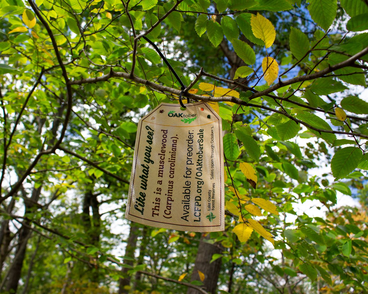 If you've been to #RyersonWoods, Wright Woods, or Half Day recently, you might've noticed these #tree tags. 🏷  There are 18 total, each marking an example of a native #plant that's on sale through our 2020 OAKtober Native Tree & Shrub Sale:  🌳