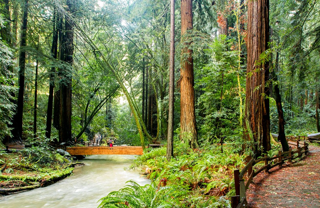 Did you know that in non-pandemic years, the @MuirWoodsNPS attracts about 1 million visitors annually?  #MarinCounty is assisting w/ #transportation improvements to help @NatlParkService meet goals for #sustainability & #PublicSafety.   Info:   #environment