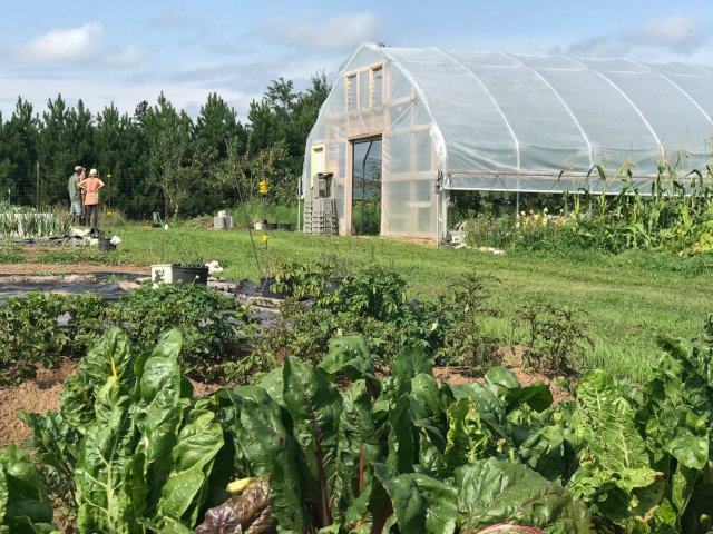 Think small and local: Young farmers creating new food systems in northeastern Minnesota. Via @MinnPost  #MNAg #agtwitter
