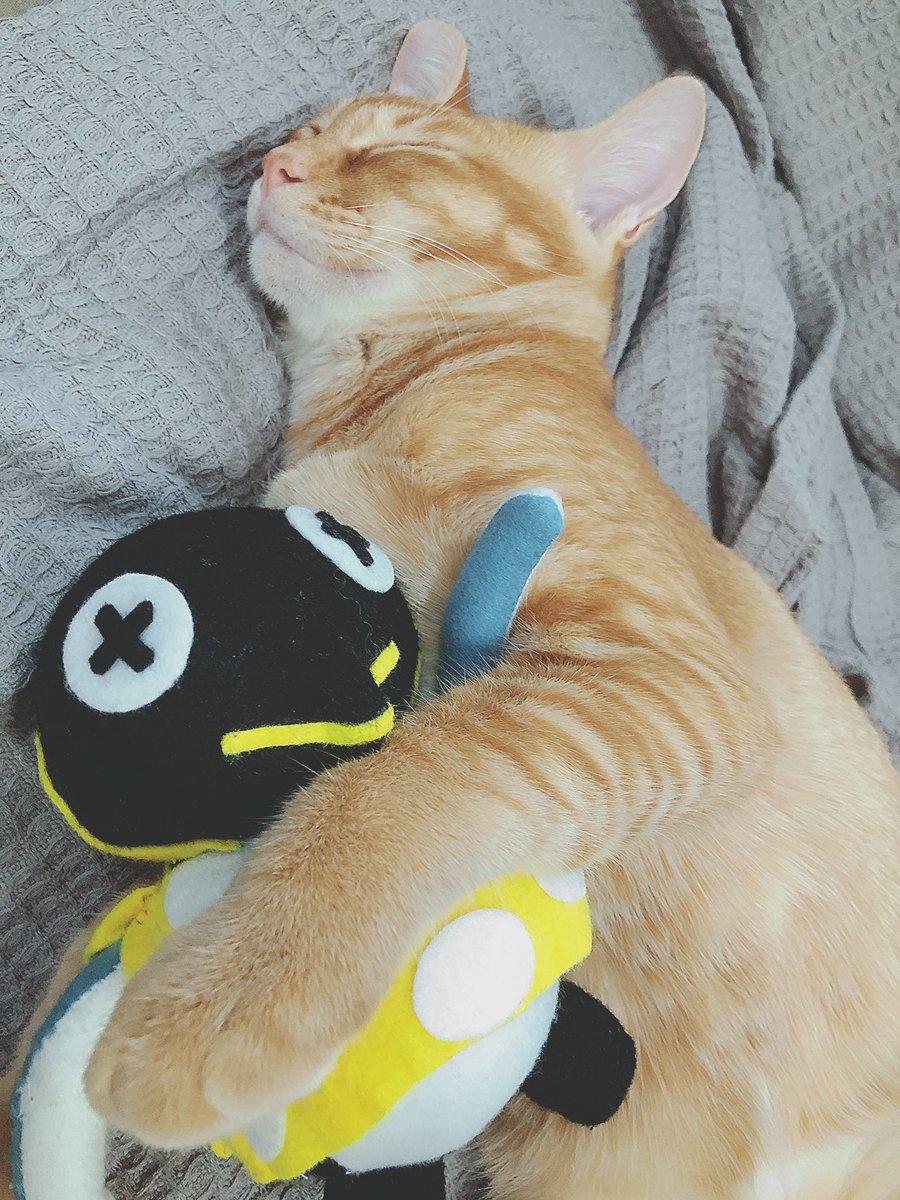 test ツイッターメディア - おはよー☀️  写真はビスぬいを抱く猫のチャス🐱 そういやぬいぐるみ作った中でビスだけまだあつ森で出会えていない😂 https://t.co/sW3n6x4pTR