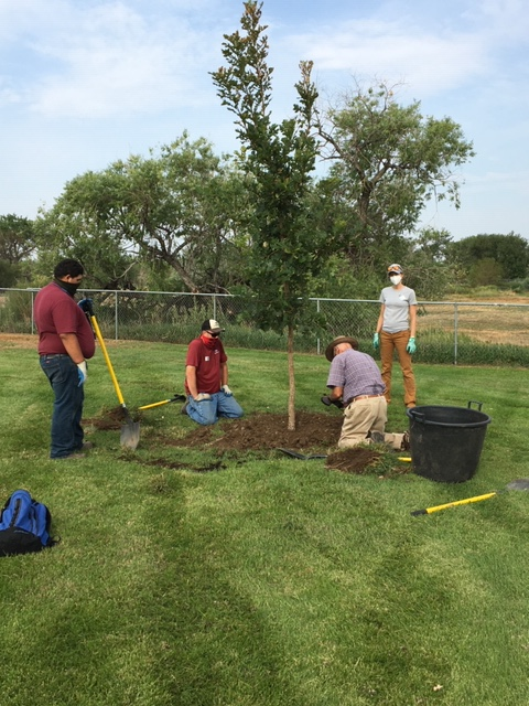 Volunteers needed! Come help plant trees for the City's second tree planting project of the year on Friday, Oct. 16. For more info and to register to volunteer:  #BrightonCO