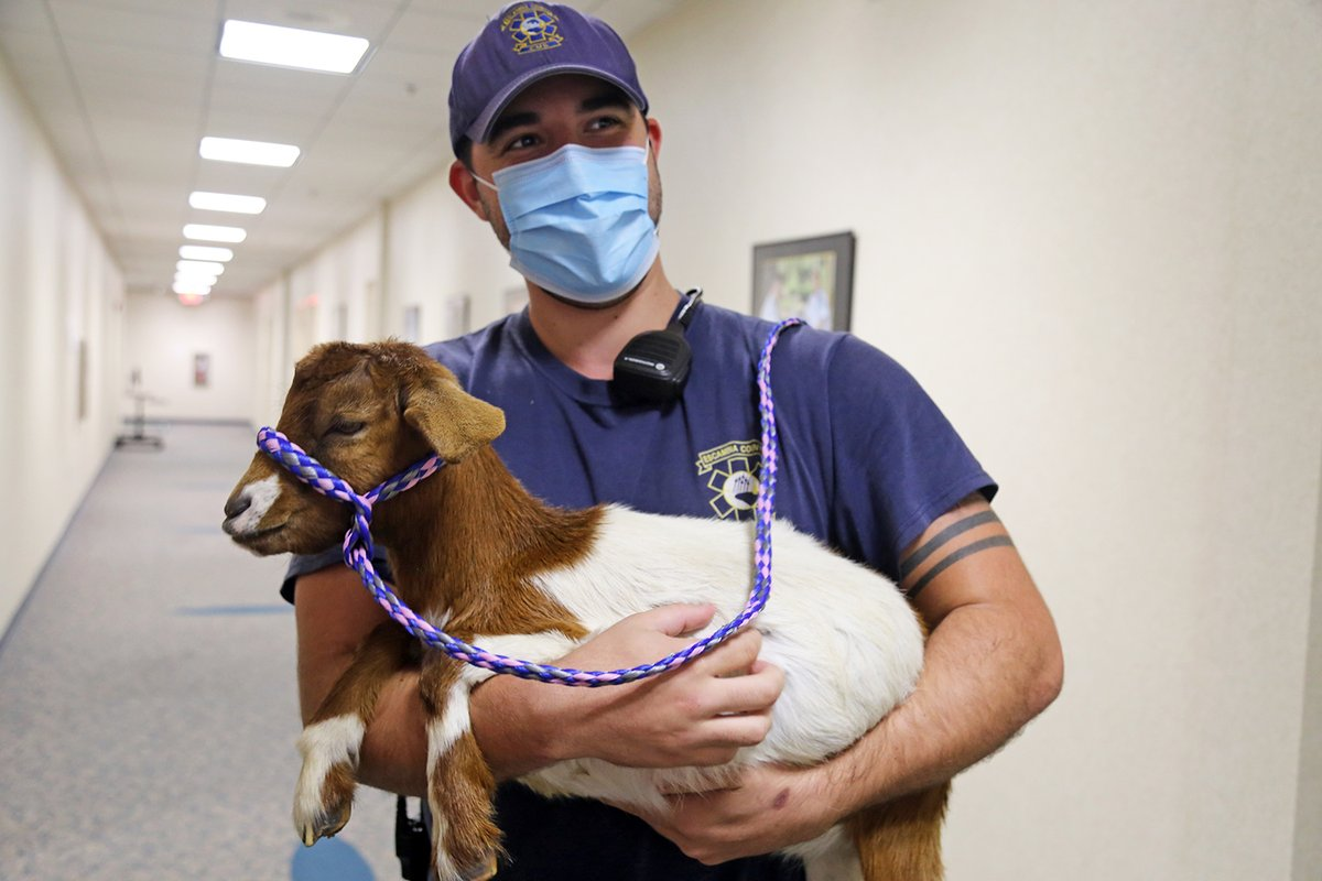💕We had some really special visitors this week at the Emergency Operations Center!   🍀 @Escambia4H stopped by yesterday with three adorable baby goats and provided a few moments of furry fun to our amazing EMS & Fire Rescue staff who have been working around the clock. 🐐