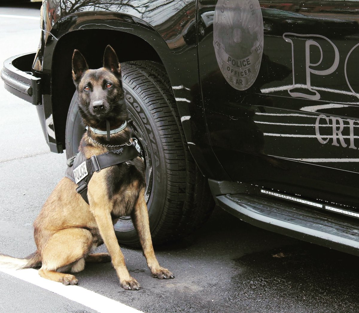 Happy Friday from K-9 Sam and all of us at BNPD!  Everyone have a great day, and as always, call us if you need us. We're here for you!  #BNPD #CommunityFirst #BeTheDifference #BentonProud