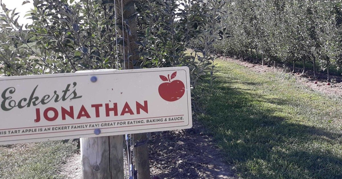 'Tis the season for apple picking and all sorts of outdoor, socially distant fun. @EckertFarms president Chris Eckert will join @STLonAir during the noon hour today to share some of his favorite apple varieties and tell us how the pumpkin crop is looking.