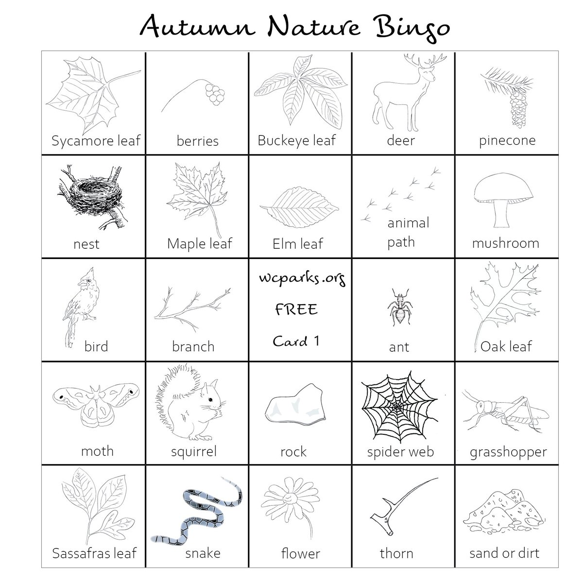 Autumn Nature Bingo #fallvibes #autumnvibes #Autumn2020 #outdoorlearning   Find more adventures at: