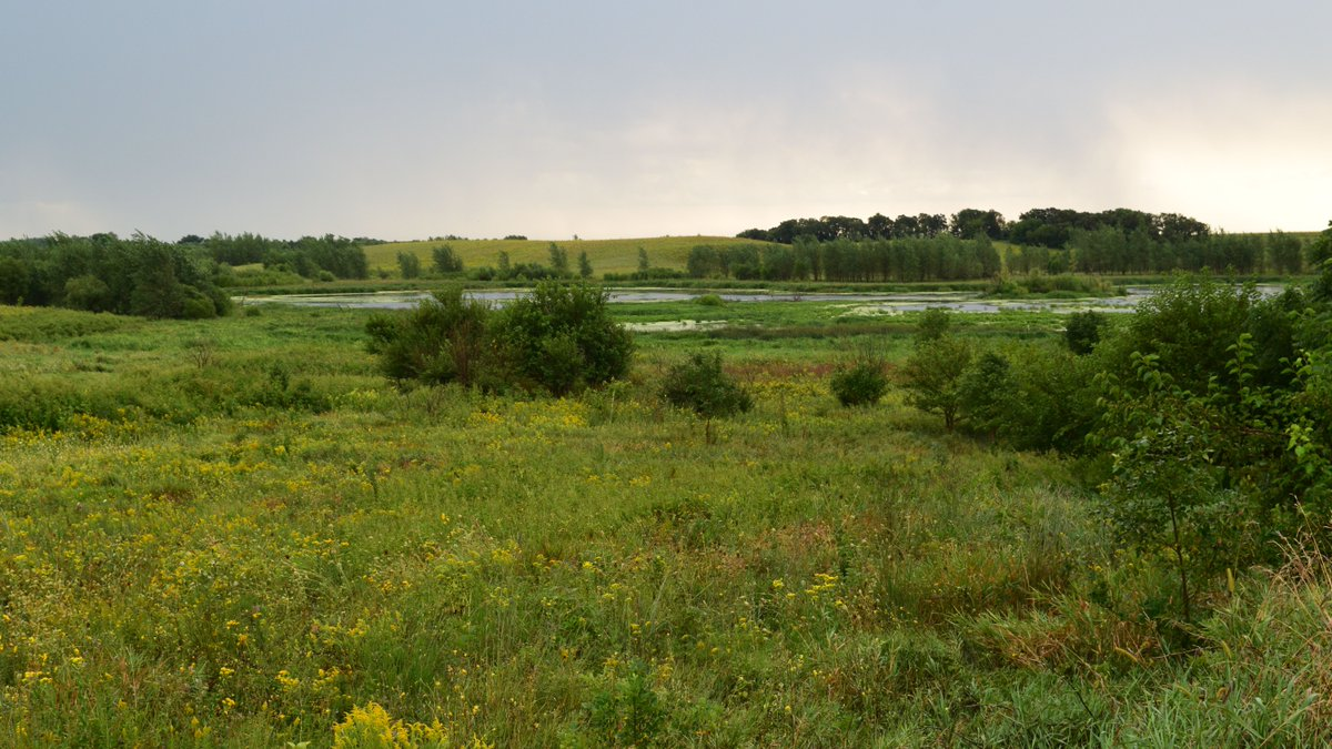 The 2,300 acres of Union Hills Wildlife Area in Cerro Gordo County offers a glimpse to what the area might have looked like when it was settled - the wetlands and prairie just has that been-here-forever kind of feel to it.  Read more:  #IowaWildlife