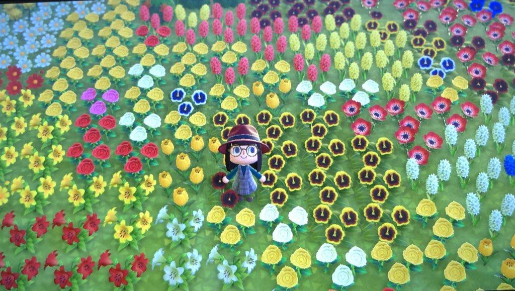 test ツイッターメディア - こんにちは❀(*´▽`*)❀ 今日はあつ森アップデートの日ですね♡ 私も帰ったらアップデートします«٩(*´ ꒳ `*)۶»ワクワク こちらはアップデート前のお花畑🌼*゚このエリアは間もなく崩しますw お花畑の整備しなければ〜! 微妙に暗いのは朝の5時だからです(*ˊ艸ˋ)♬*  #あつ森 https://t.co/6VfAKorPcQ