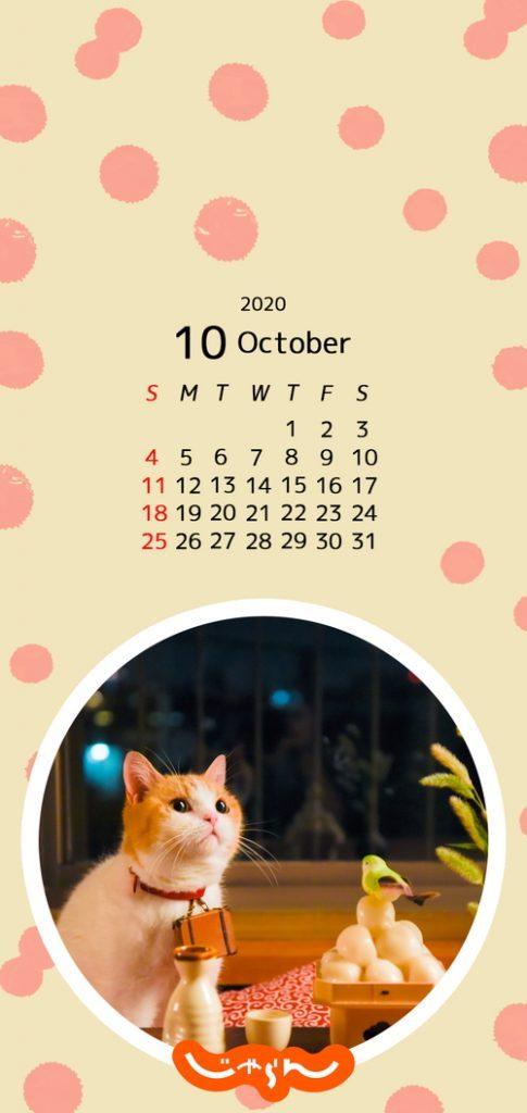 test ツイッターメディア - \\今日から🔟️月//  10月のにゃらんカレンダーと壁紙をこちらに置いておきますね( *・ω・)⊃旦 スッ  だんだんと涼しい日が多くなり 秋が深まるのを感じますね🍁  季節の変わり目ですが体調に気を付けて 行楽の秋を楽しみましょう☺✨  #じゃらん #にゃらん https://t.co/ZLY8pbBKwE