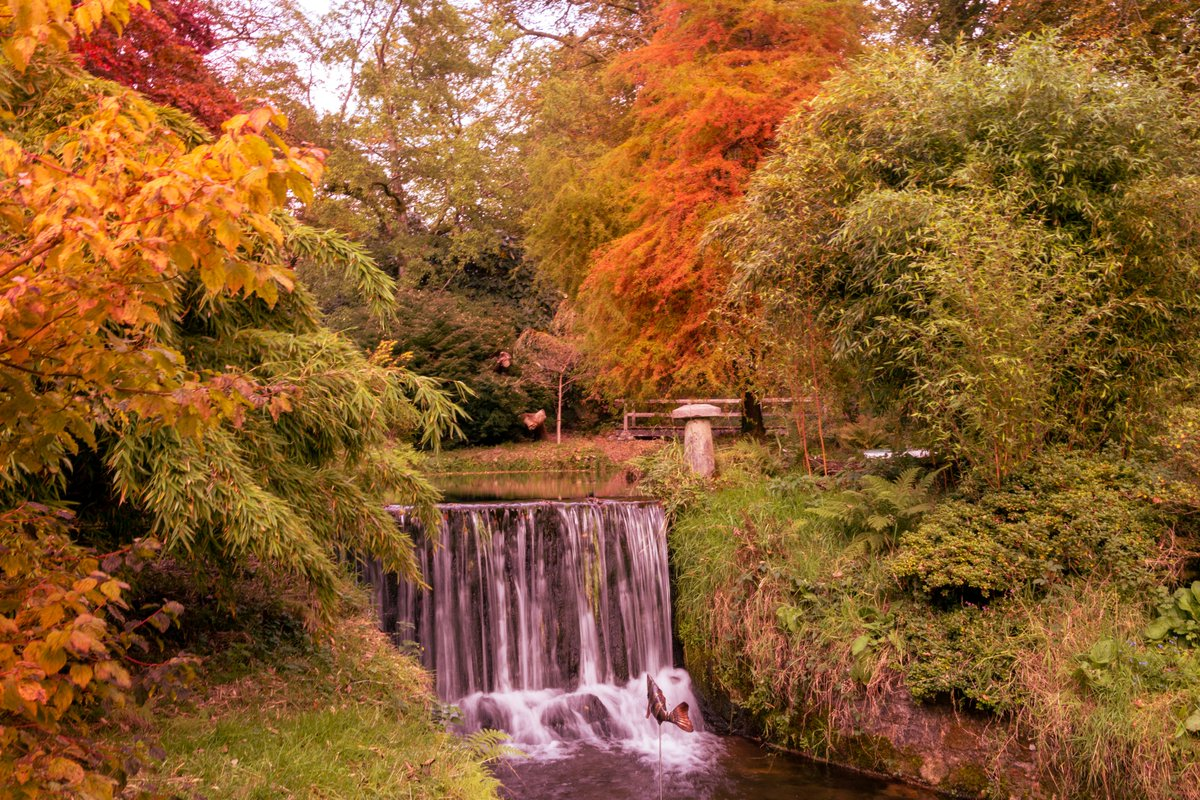 test Twitter Media - L U K E S L A N D   G A R D E N S  Autumn creates a vibrant display of colours. Lukesland is a 24-acre family-run garden in @dartmoornpa, on the edge of #Ivybridge.   #Dartmoor #Devon #SouthDevon #VisitDevon #LoveDevon #ExploreDevon #SWIsBest #Autumn #WeKnowPlymouth https://t.co/JY9AD8H6pC