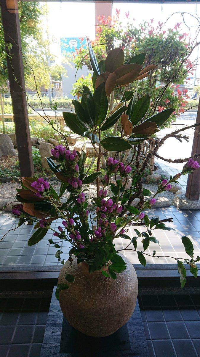 test ツイッターメディア - 帰りに山田屋まんじゅうさんに寄りました。つくばいのところの、ホトトギスや、竜胆がきれいでした。写真には写っていないけど、金木犀や赤い実も飾ってありました。JAFの分、1個おまけ付き。美味しくいただきました。 https://t.co/diYL7aupui