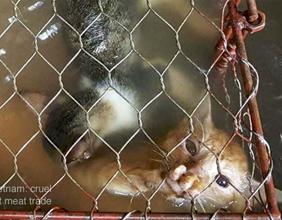 @MaryJoe38642126 @CongressmanRaja @HouseAgDems @HouseForeign Please consider #HConRes71, the #dogcatmeattrade is #hell. Urge all #nations to follow it. These #animals are #boiled, #skinned, #hanged and #beated #alive.