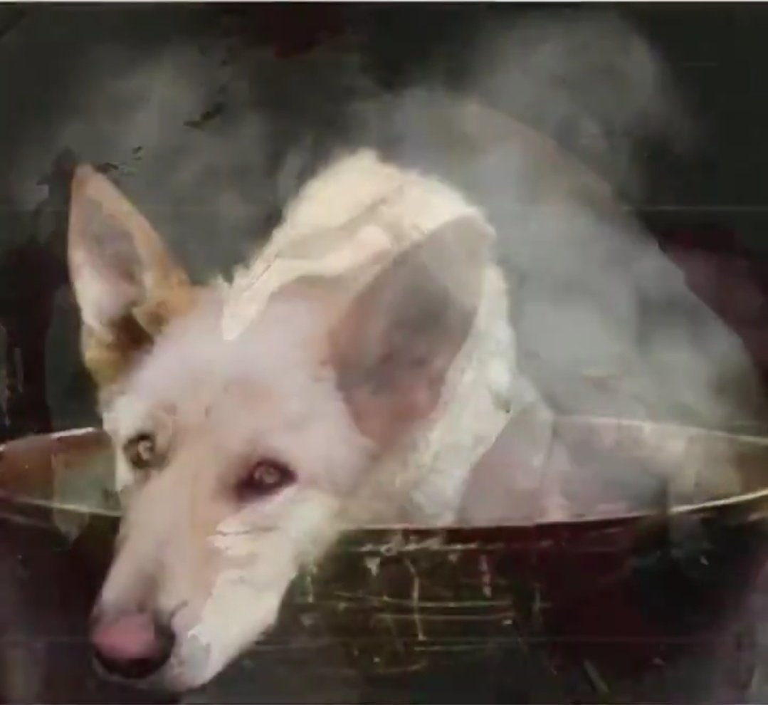 @MaryJoe38642126 @JimLangevin @HouseAgDems @HouseForeign Please consider #HConRes71, the #dogcatmeattrade is #hell. Urge all #nations to follow it. These #animals are #boiled, #skinned, #hanged and #beated #alive.
