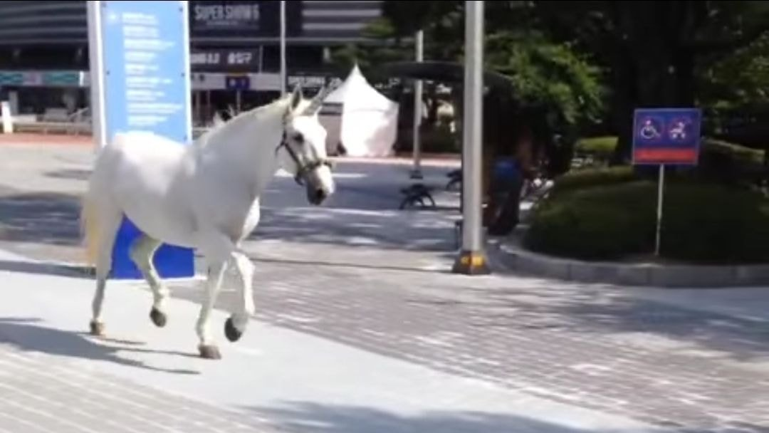 A real-life unicorn was spotted at Super Junior's concert?