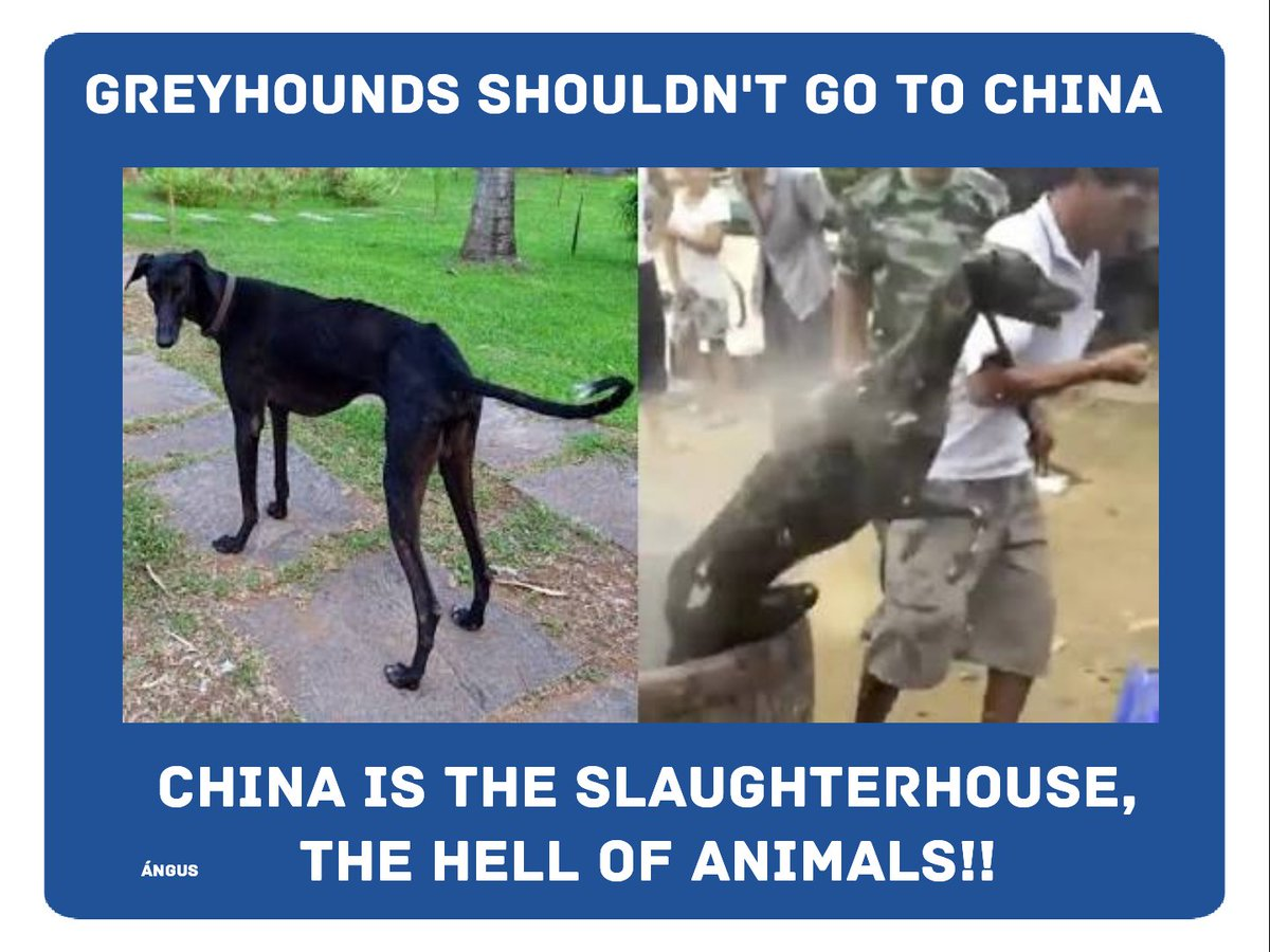 @MaryJoe38642126 @MurphyEoghan In what way can we ask you to come to your #senses, please don't continue sending the #greyhounds to the #red #hell?, it's the most #cruel and #infernal place on #earth.