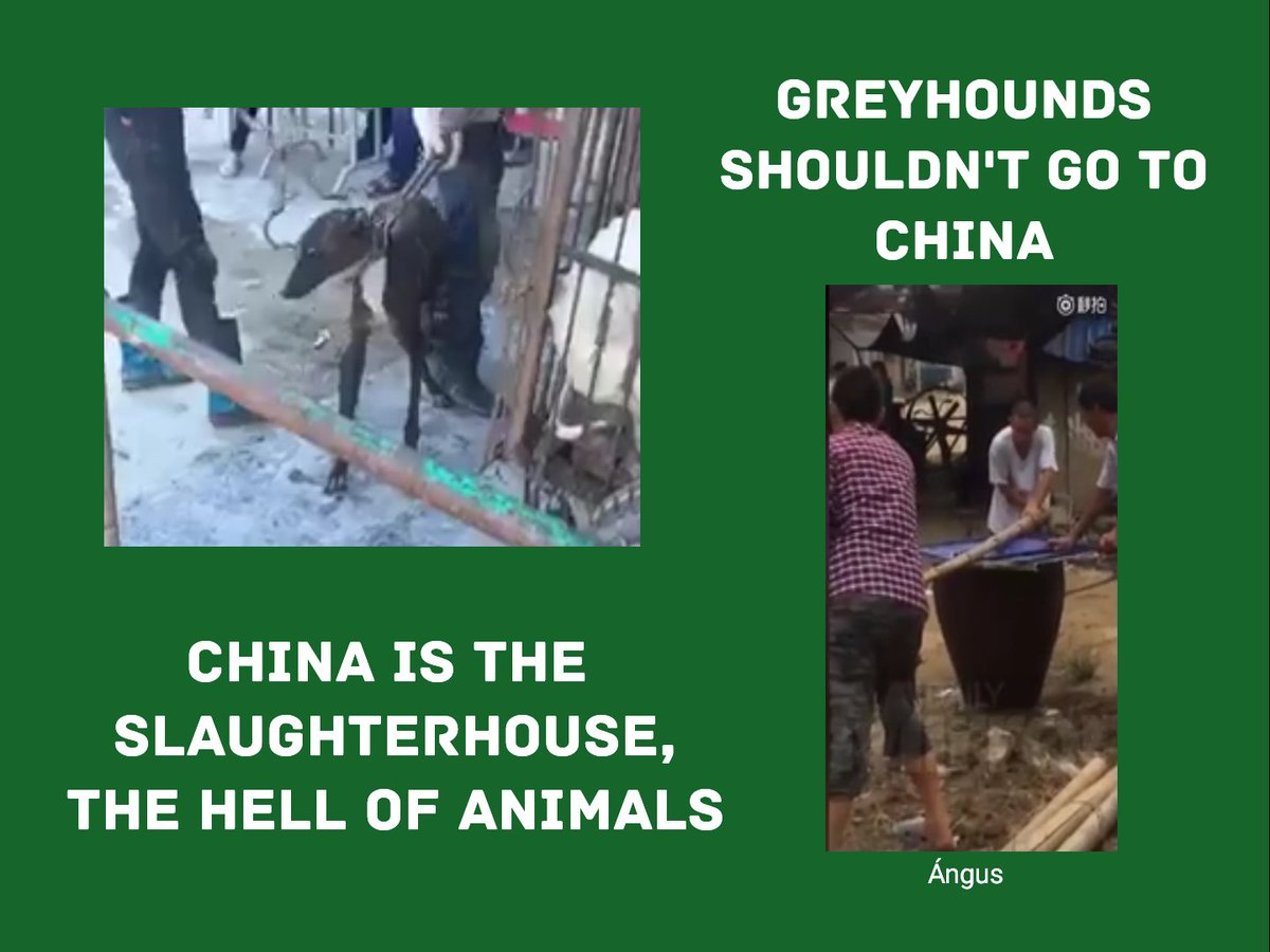 @MaryJoe38642126 @BGriffinTD In what way can we ask you to come to your #senses, please don't continue sending the #greyhounds to the #red #hell?, it's the most #cruel and #infernal place on #earth.