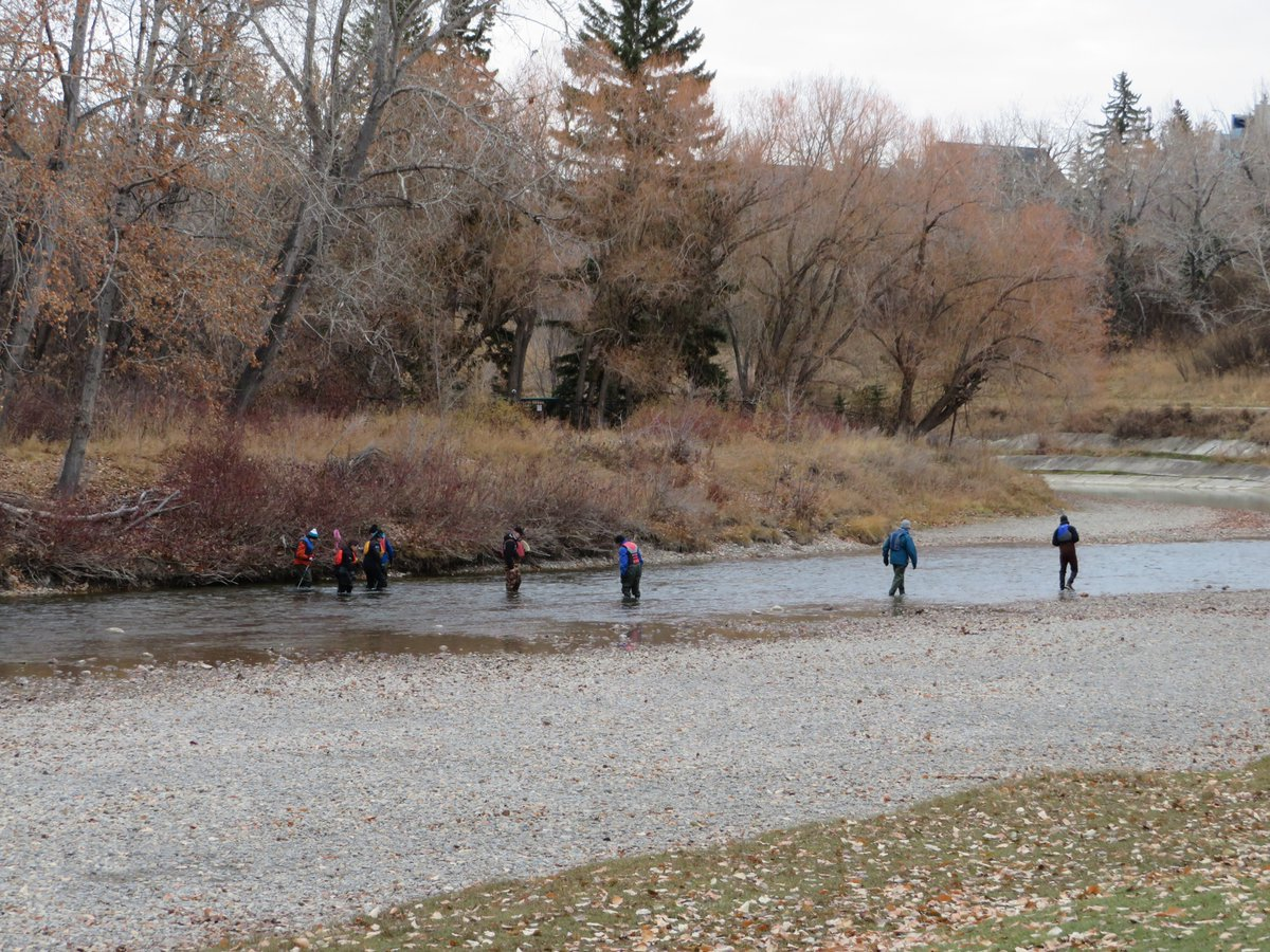 test Twitter Media - The annual Brown Trout Redd Count in the Elbow River is today. A few @clgrivervalleys volunteers, led by fish biologist, Chris Bjornson fr Golder Associates, are counting redds (spawning nests) of Brown Trout betw Glenmore Dam & Ft Calgary. This is 1 measure of river health https://t.co/esXMEks0Qh