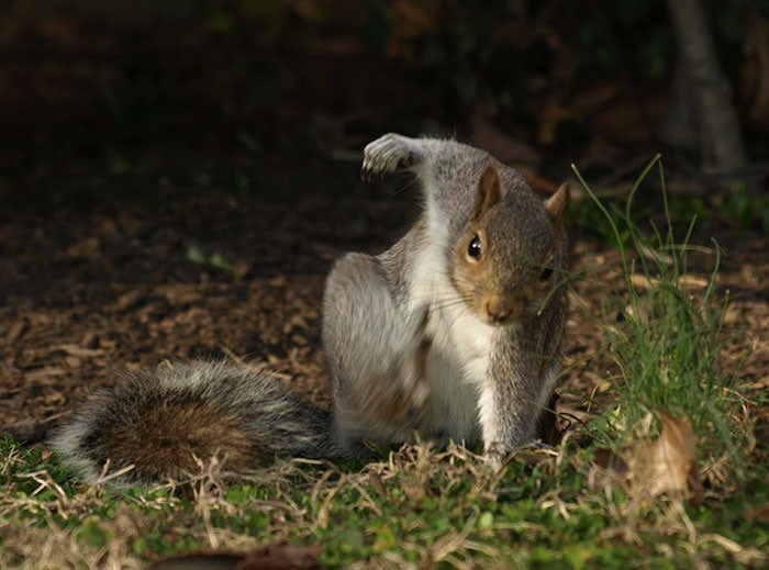 The best thing I've learned this week is that when squirrels fall/jump - they land like superheroes