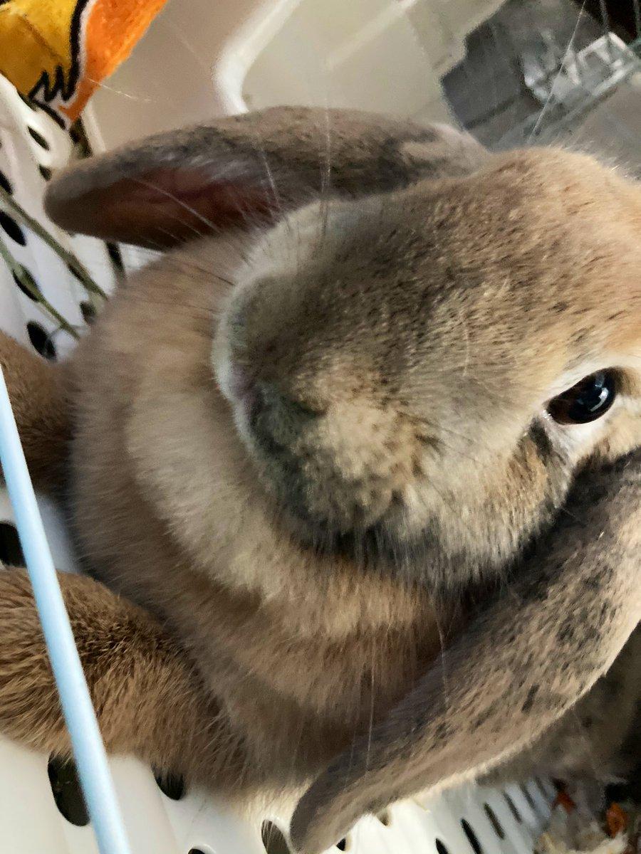 test ツイッターメディア - 今日も朝からオンラインレッスンです😤  頑張るぞー💪  (可愛い可愛いうちのウサギを見てください🐇) https://t.co/GGytValpD4
