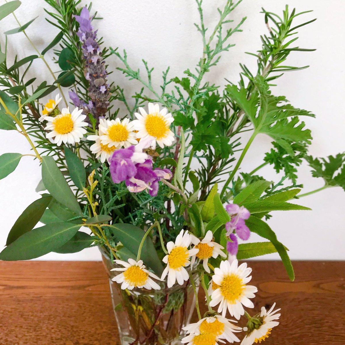 test ツイッターメディア - 道の駅が好きすぎて困る。上野の道の駅で丁稚ようかん爆買い。 平群の道の駅の園芸コーナーの切り花が安くて買いすぎる。良い香りで幸せ。産直の野菜なんかもドシドシ買ってしまう。危険スポット道の駅。 https://t.co/neIWYzH7Su