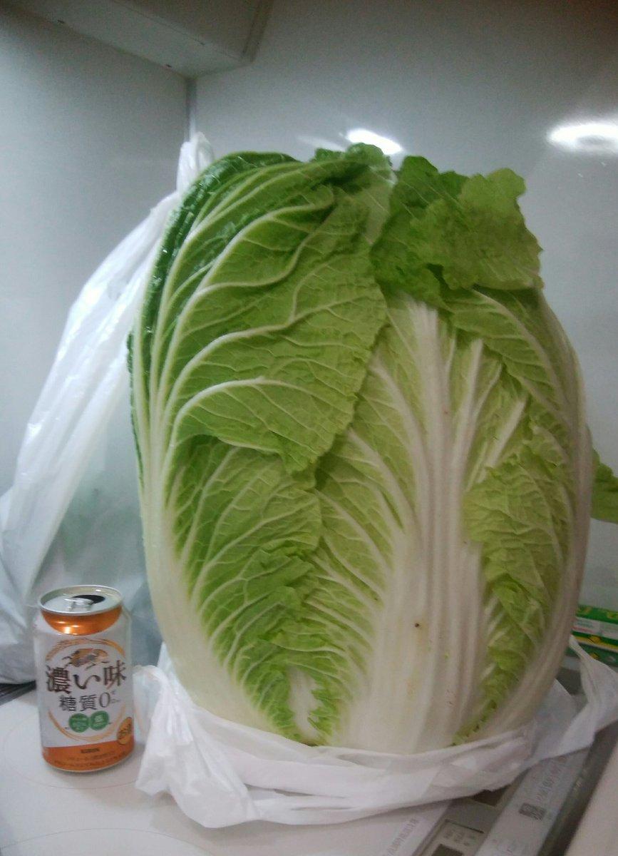 test ツイッターメディア - 昨日は収穫体験(≧∀≦) 1枚目、何か分かりにくいですが白菜です💦息子が見つけたこれ、5㎏超えの今年最大級だったみたいです(≧∇≦)bいらない葉を落としても買い物かごいっぱいサイズ💦 迷わず鍋にしました(笑) 安い短冊で買っても薄く切れば立派なブリしゃぶ、旨かった~すぐ泡1本空いたっす😍 https://t.co/jq7WH2OBiS