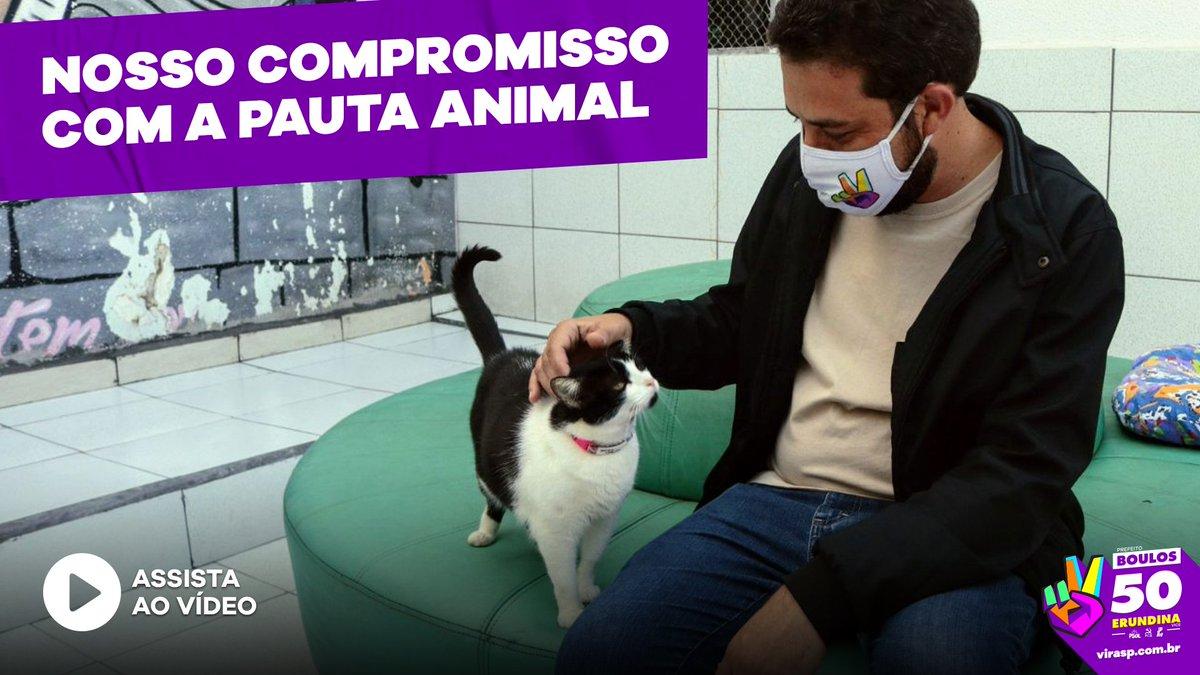 Conheça minhas propostas pra transformar São Paulo na cidade dos cuidados com os animais. Chega de maus-tratos! #ViraSP50 #Boulos50