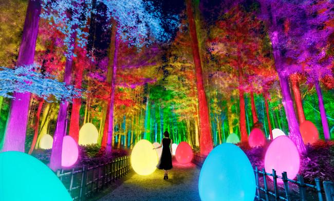 test ツイッターメディア - 【茨城 水戸】「チームラボ 偕楽園 光の祭」2/13(土)開催🪐🌌 @kairakuen_ibrk   日本三名園・偕楽園 梅が咲き誇る美しい庭園が光のアート空間に💫  詳しくはこちら ✔https://t.co/JI9DgDhZiL https://t.co/Tp90wZc0ub