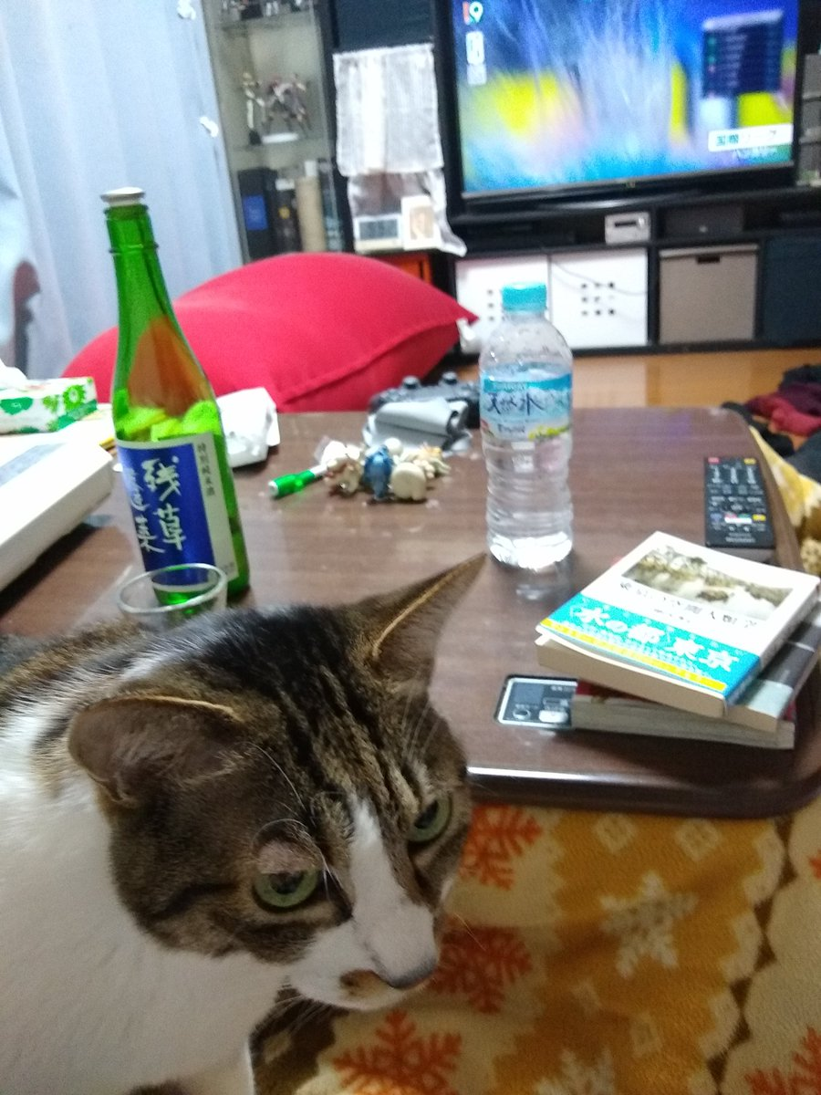 test ツイッターメディア - 今宵は「残草蓬莱 〜 ざるそうほうらい」 ぬる燗です  ネコが居るのでお酒のチェンジできませぬ  #残草蓬莱 https://t.co/ecPufCpSM5