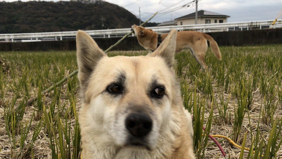 長い凶器をもった犬が後ろにいるがまだ気付いてない