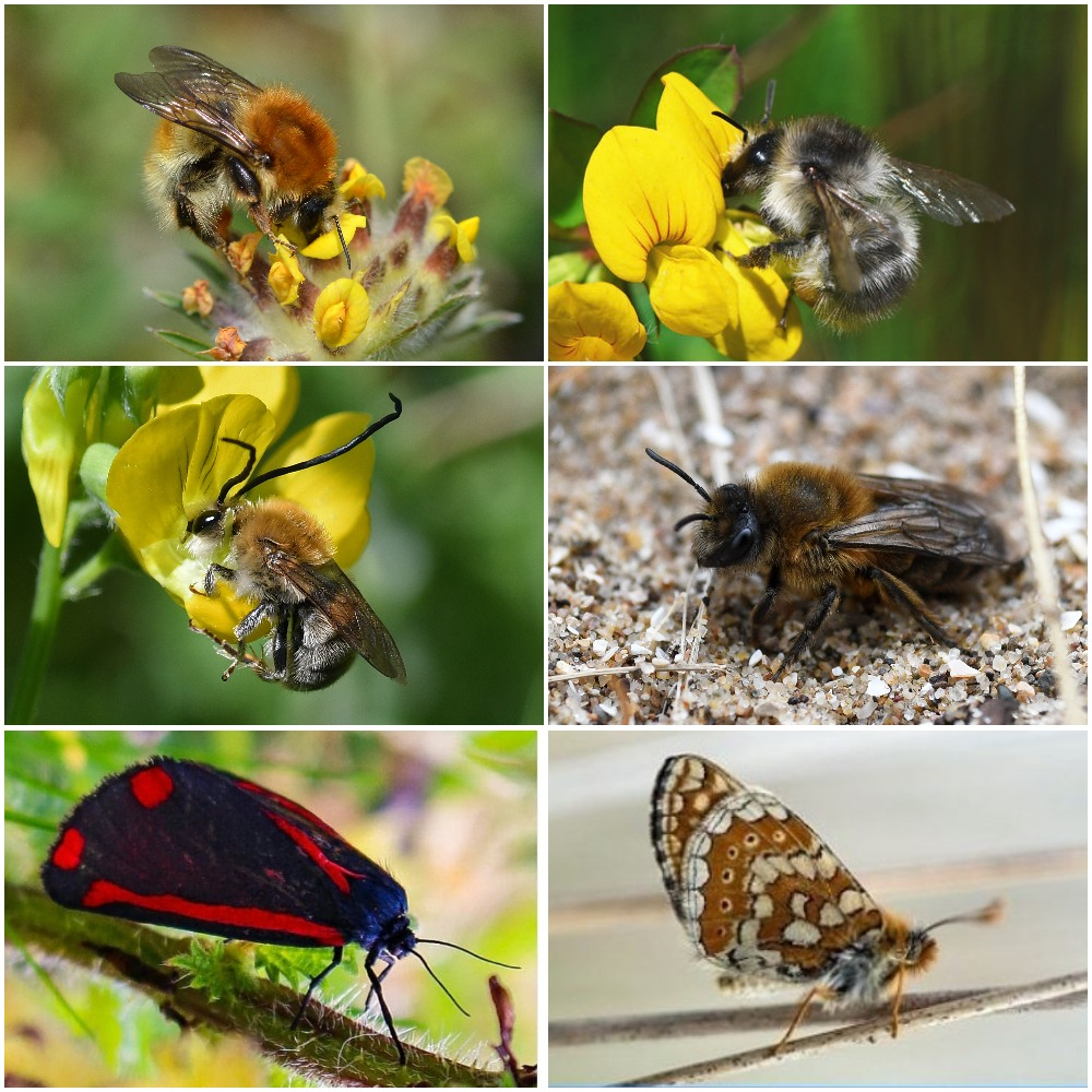 Here are some of the incredible invertebrates that we are helping as part of our Neath-Port Talbot B-Lines, a @HeritageFundUK project to restore and enhance wildflower-rich habitats to provide a brighter future for pollinating insects.  These are our #HeritageTreasures. https://t.co/ZKWzxNx8zo